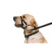 Head Halter for Dogs That Pull