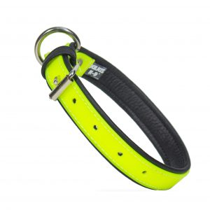 Fluorescent Dog Collar