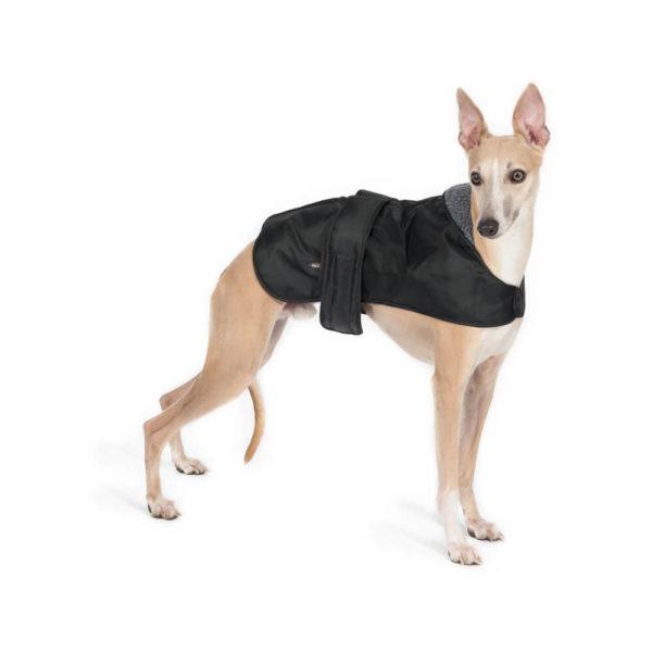 whippet dog coat