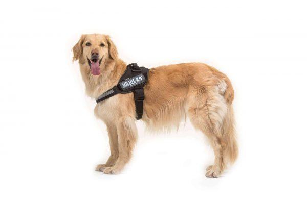 Julius-K9 IDC Dog Powerharness