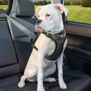 Kurgo Impact harness for dogs