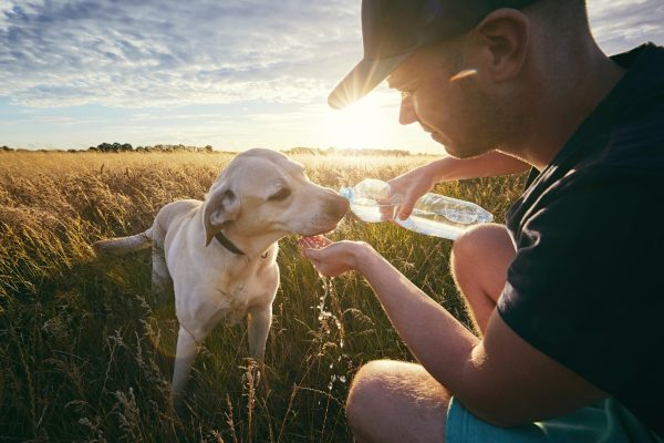 how to get a dog to drink water from bottle